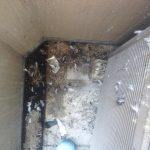 【作業事例】名古屋市でハト糞ベランダ清掃~ハト糞は有害です~